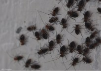 I thought this was a bunch of tiny, newly hatched spiders but when I looked at the photo, I saw that they are not spiders at all