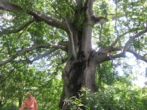 There are some amazing trees!