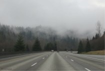 I love the trees in the fog