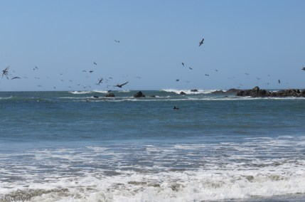 More pelicans. They were everywhere!