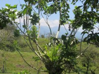 This is a view from the farm behind the casitas.