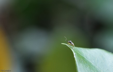 A tiny bug on the end of a leaf caught with my macros lens.
