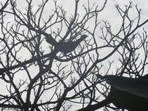 This one was beautifully silhouetted against the sky.