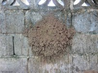 On the back of the building we found this. What is it?! Maybe its a huge home for those wasps that make their homes out of mud?