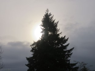 The sun tried to come out this morning
