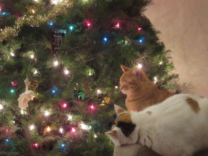 Two of the cats, enjoying the Christmas season (and being remarkably good about not bothering the tree)