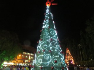 The tree in the downtown city park