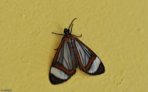 little butterfly on the wall