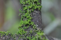 a bit of moss growing on the orange tree