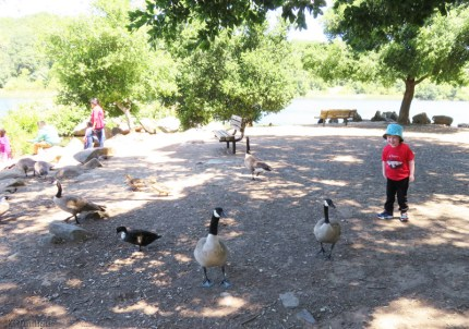 Ducks and geese!