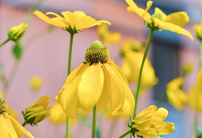 nature-flowers-summer-garden