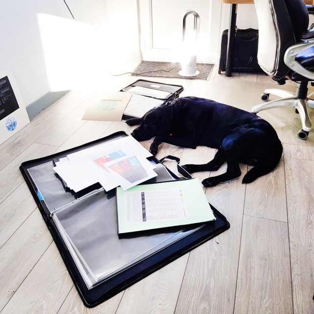 image shows open portfolio case lying on ground with dog sleeping next to it