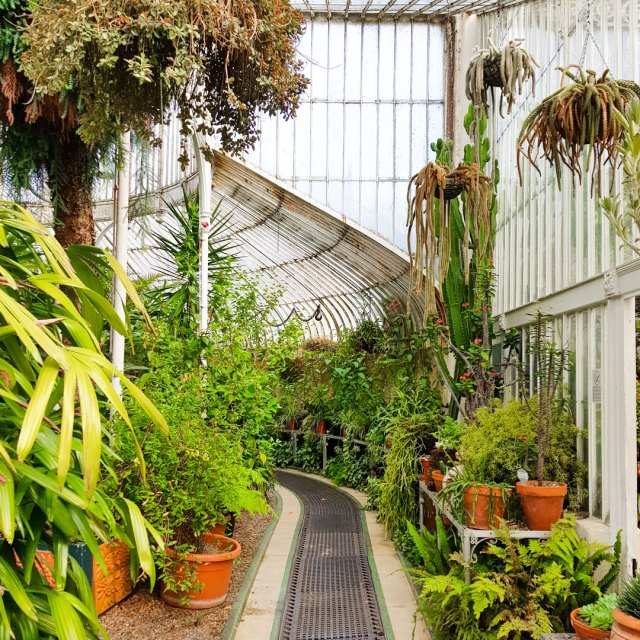 Image shows Belfast Botanical Gardens glasshouse.