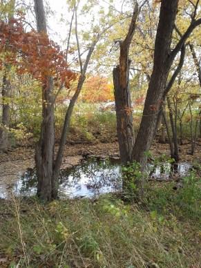 20151019 autumn puddle