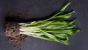 Leeks pictured against a dark grey background
