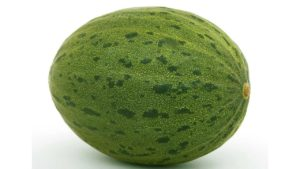 A large, ripe watermelon