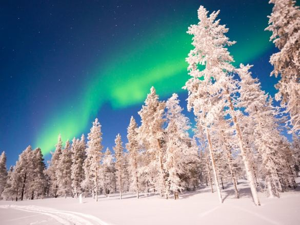 Picture of snowy white trees and the Aurora in Lapland