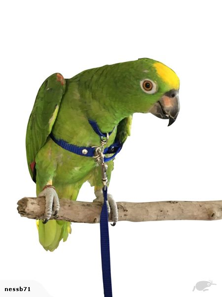 Bird Flight Harness