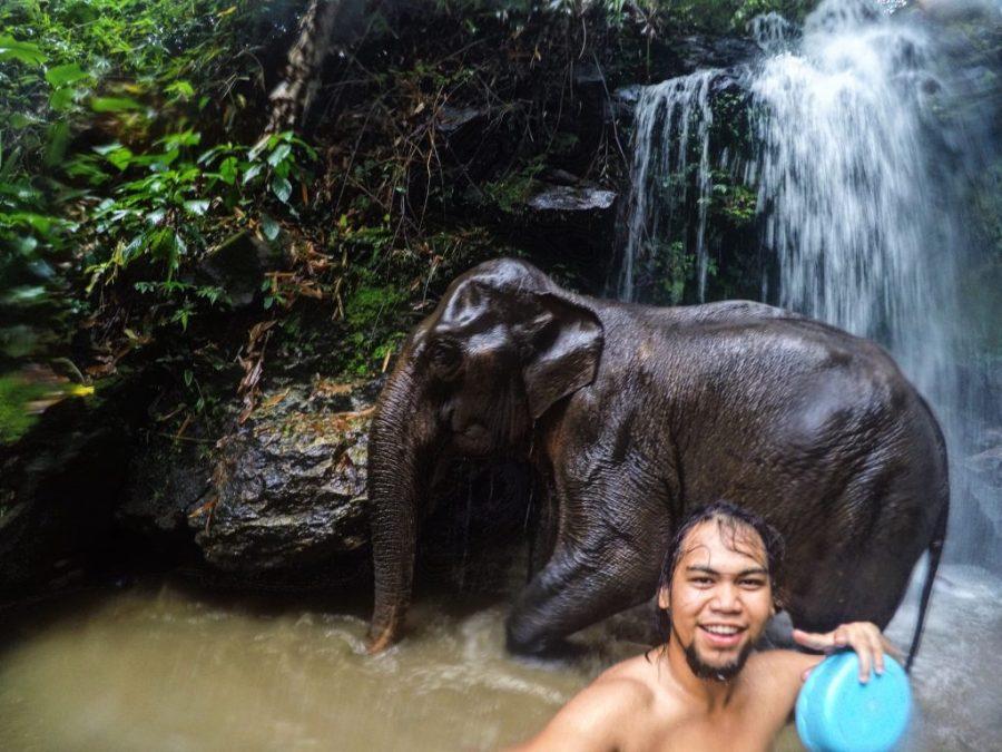 thailand elephant