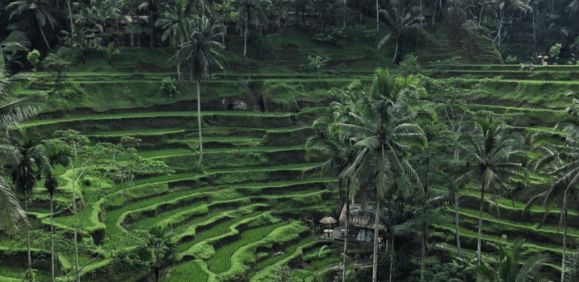 tegallalang rice terraces bali