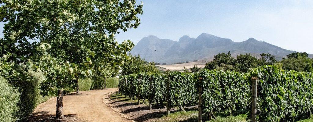 reveler tours south africa