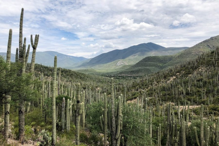 tehuacan cuicatlan biosphere reserve oaxaca mexico