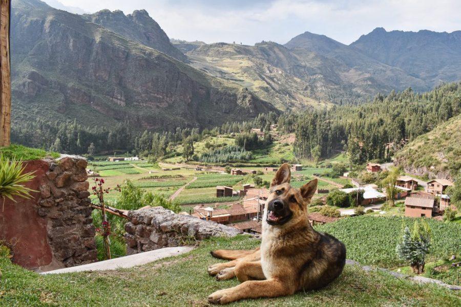 wolf totem nomad hostel pisac peru