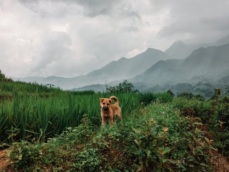 sa pa vietnam rice terrace hike