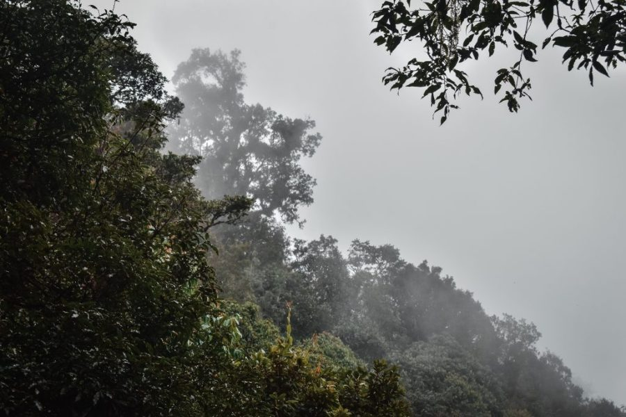 huitepec hike san cristobal de las casas