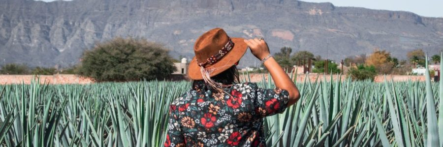 guide to visiting tequila jalisco mexico
