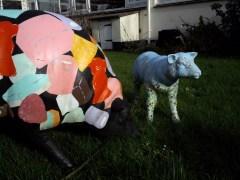 Sheep in the school garden