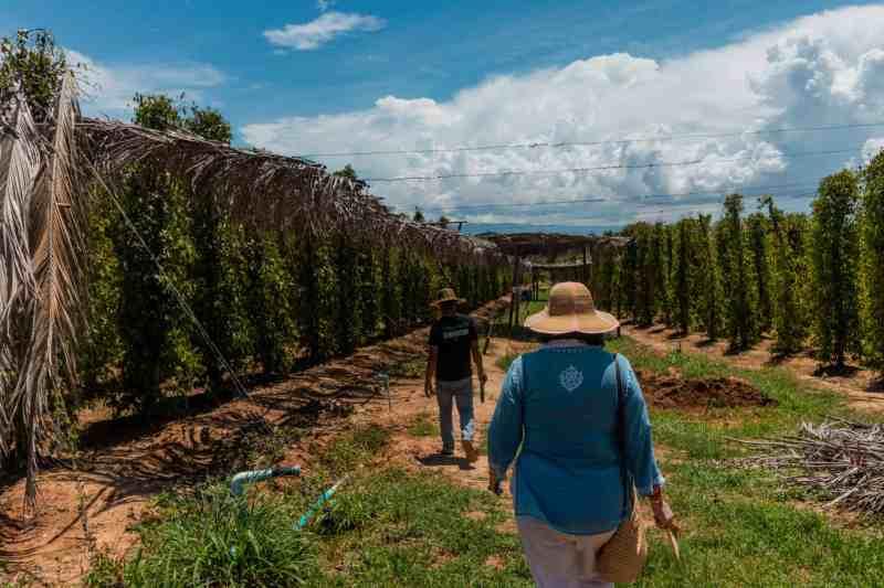 Guide Leading La Plantation Pepper Farm Tour