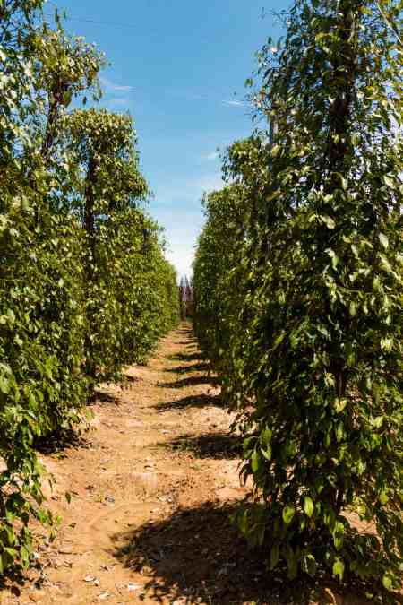 La Plantation Pepper Farm