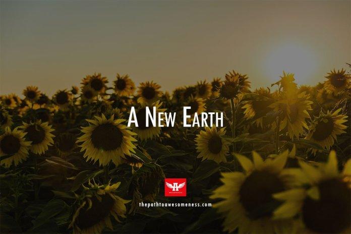 garden of sunflower during sunset