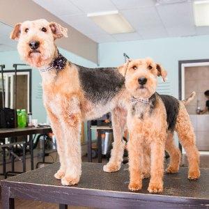 dog-grooming-winnipeg-2