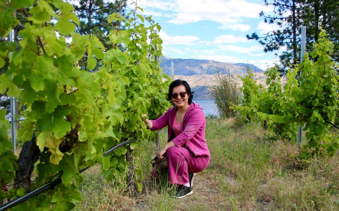 Hainle Vineyard and Estate Winery