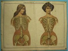 corset 12
