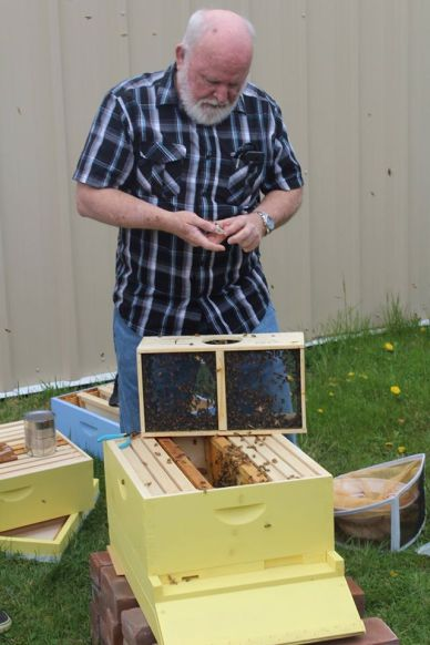 Photo by Stephanie Castillo. Bob Irvin, a community volunteer, helps get the bees set up April 4. Irvin often comes to give lectures and check on the bees health.