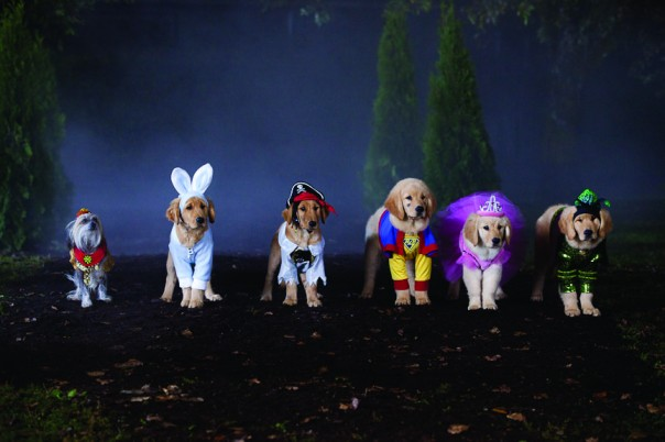 Feature: Halloween Films for All the Family
