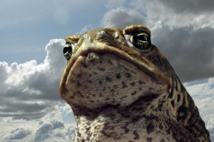 Competition: Win CANE TOADS: THE CONQUEST On DVD!