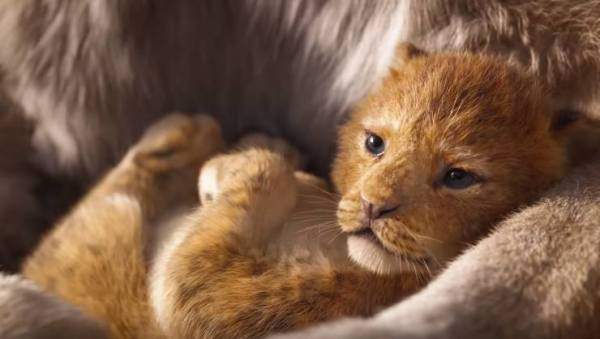 The Lion King 2019 First Trailer Is All About The Circle Of Life