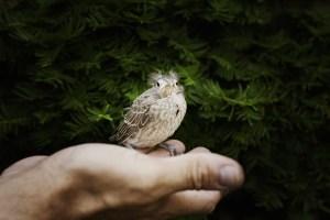empty-nest-babybird