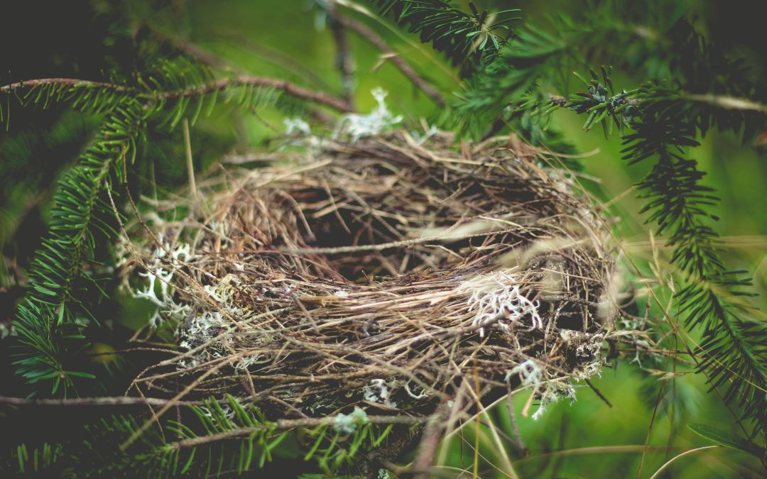 Mamas, Dramas, and Leaving The Nest