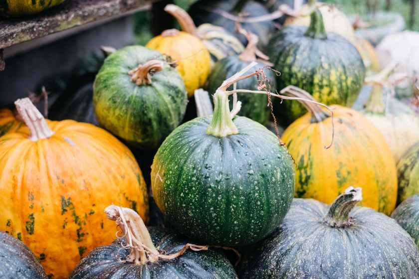 green and yellow small pumpkins