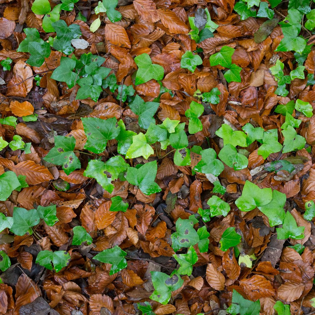 Forest floor, Lyme Regis Undercliffs, Devon.