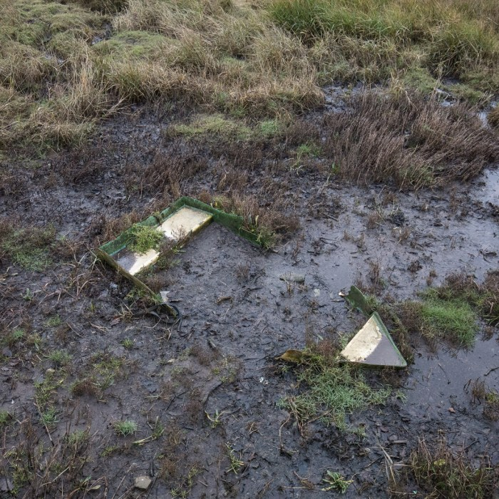 Taking Root. Neyland, Pembrokeshire.