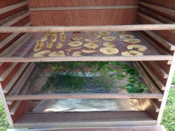 Drying Chamber Solar Food Dehydrator