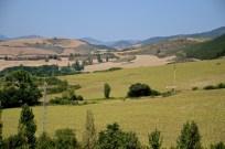 The Camino 5