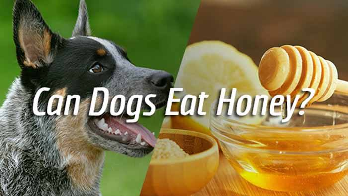 Can Dogs Eat Rachael Ray Cat Food