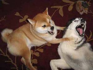 dog Aggression between dogs in the house